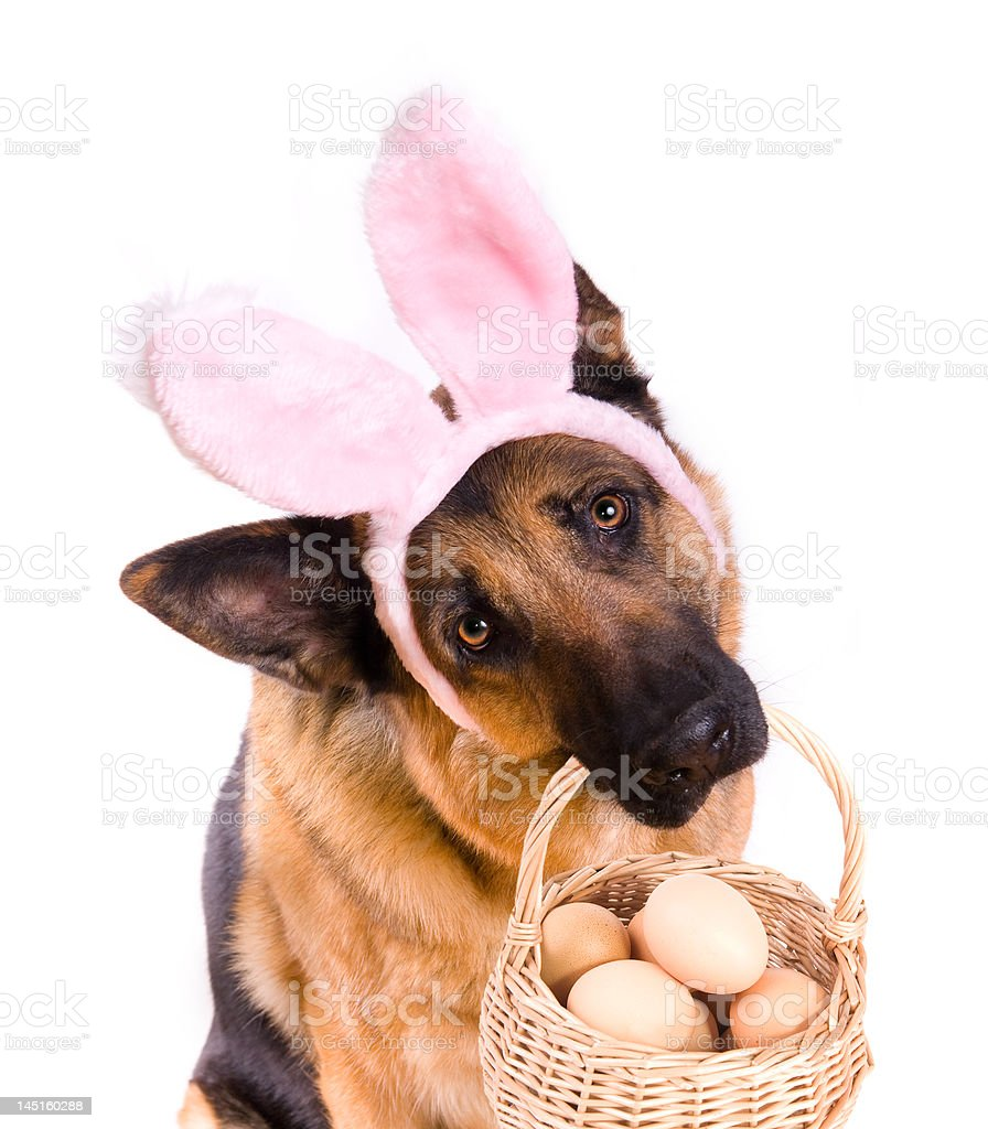 Funny Easter Dog With Basket stock photo