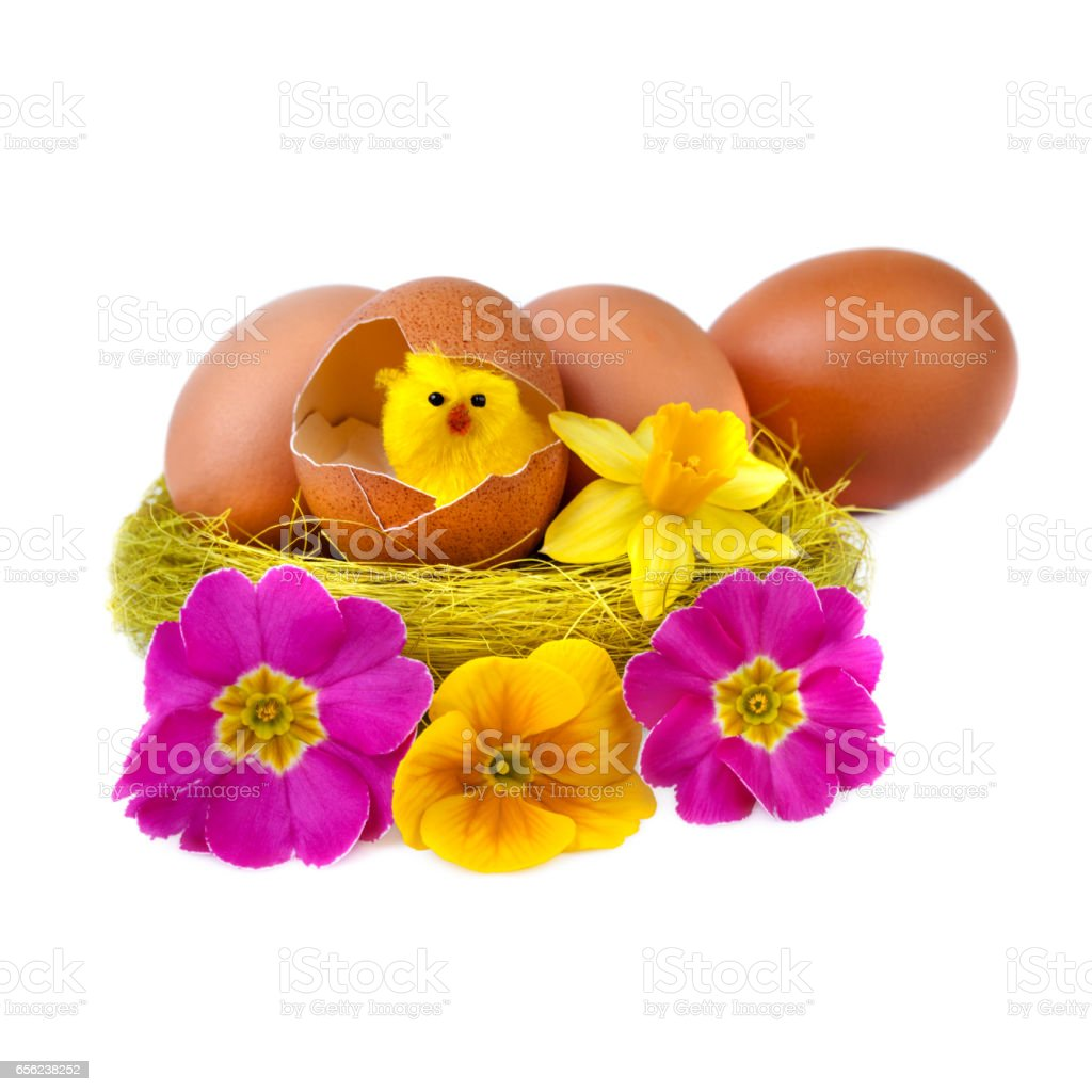 Funny Easter Egg Decoration with Yellow Chick and Flowers stock photo