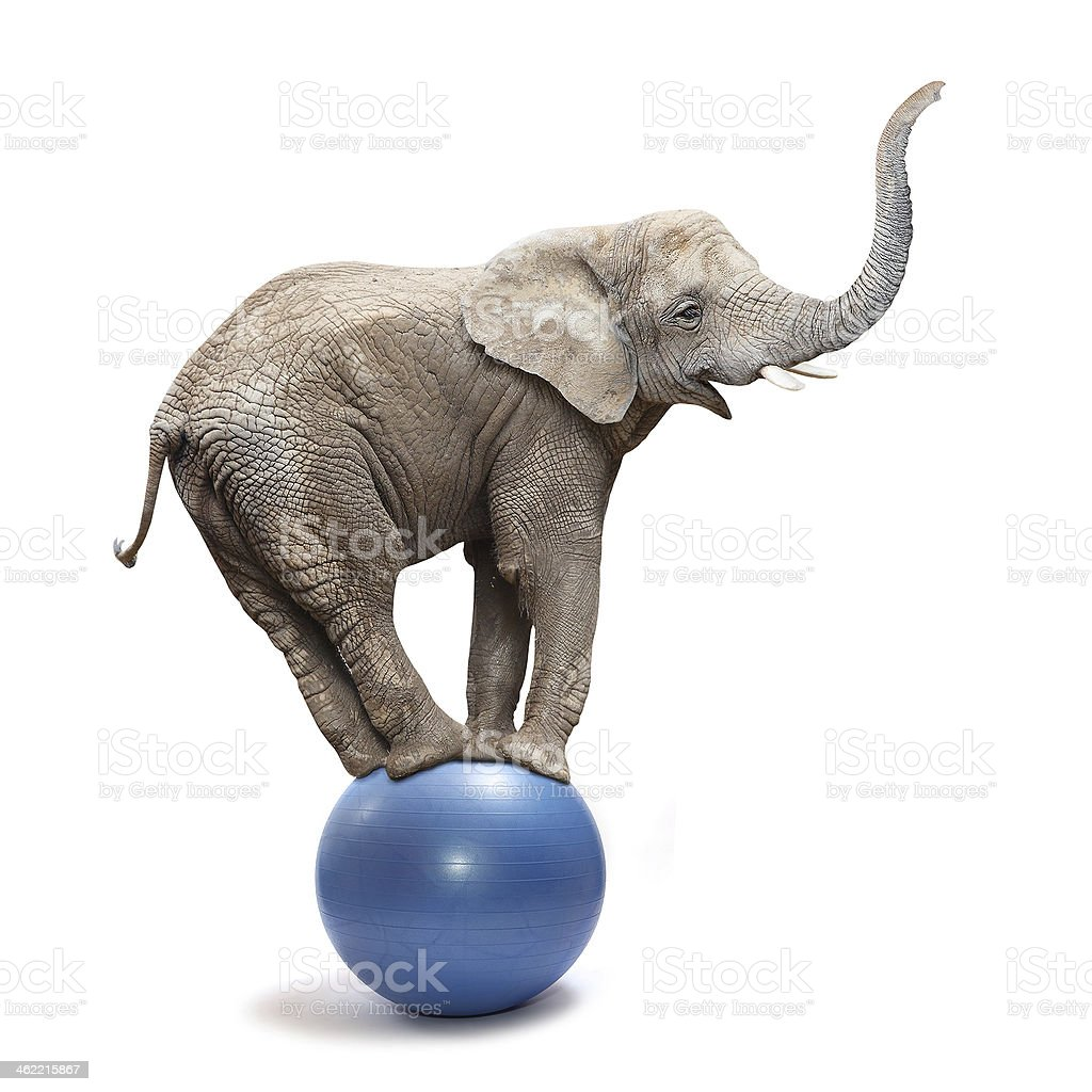Funny elephant. stock photo