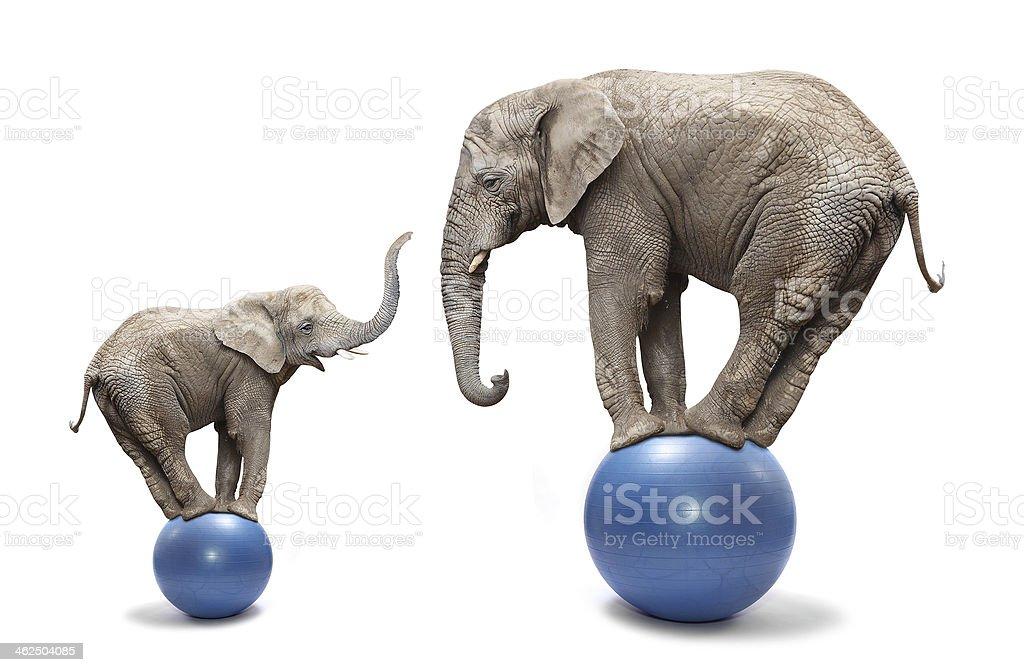 Funny elephants. stock photo
