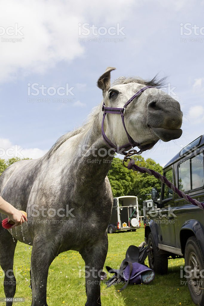 Funny face horse style royalty-free stock photo