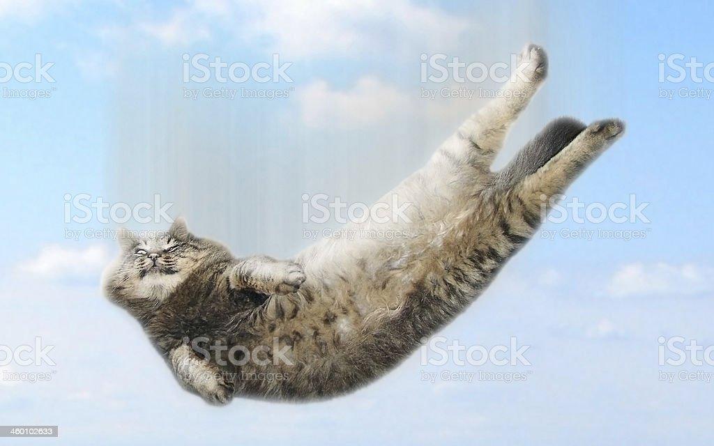 Funny falling cat stock photo