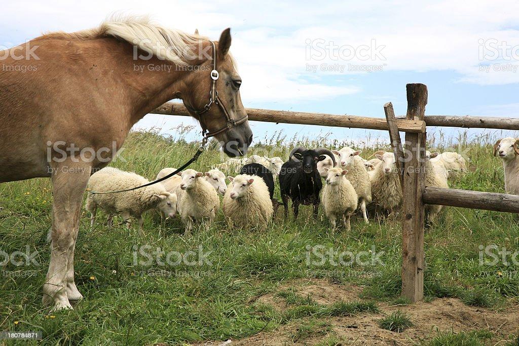 Funny farm. royalty-free stock photo
