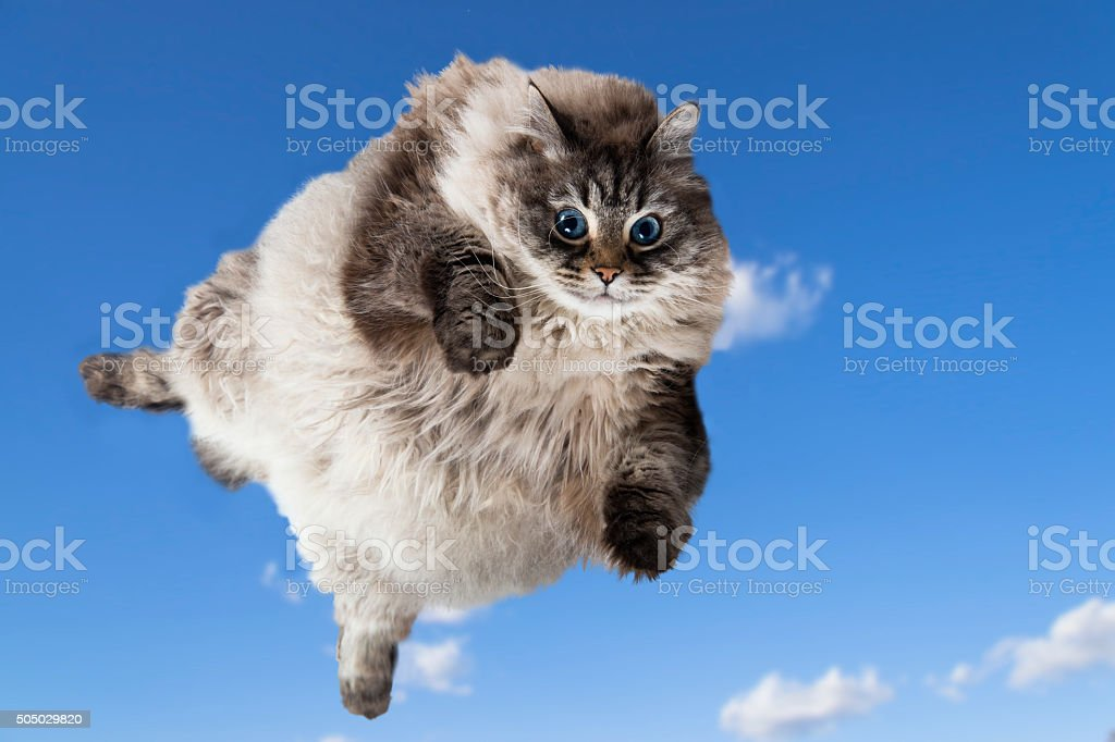 Funny Fat cat levitate in the sky stock photo