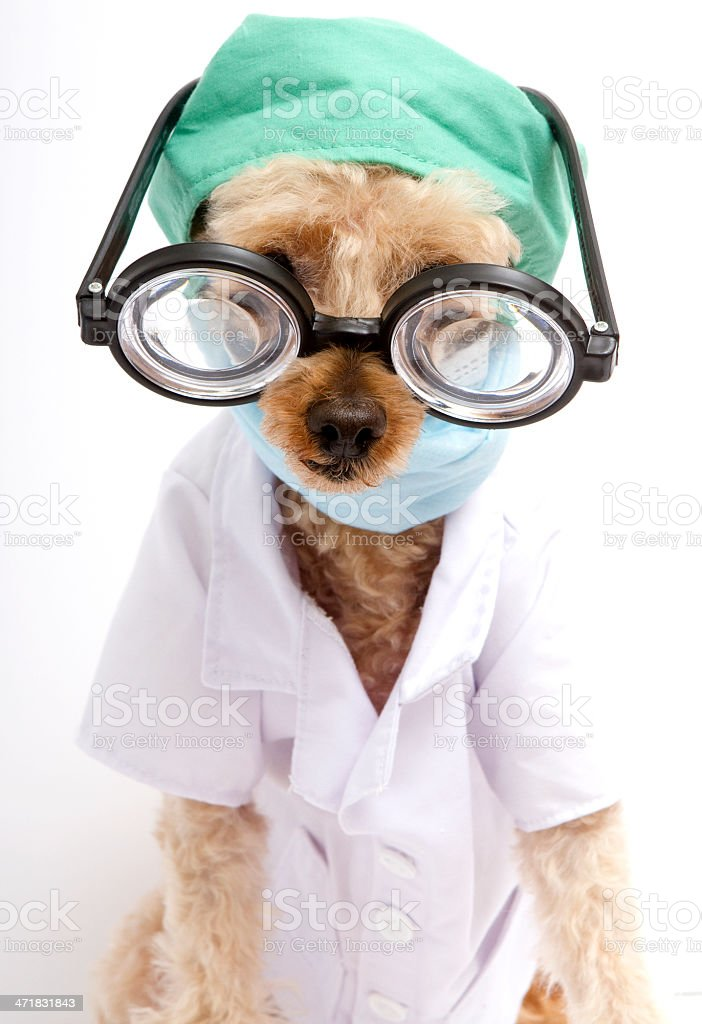 Funny Furry Doctor royalty-free stock photo