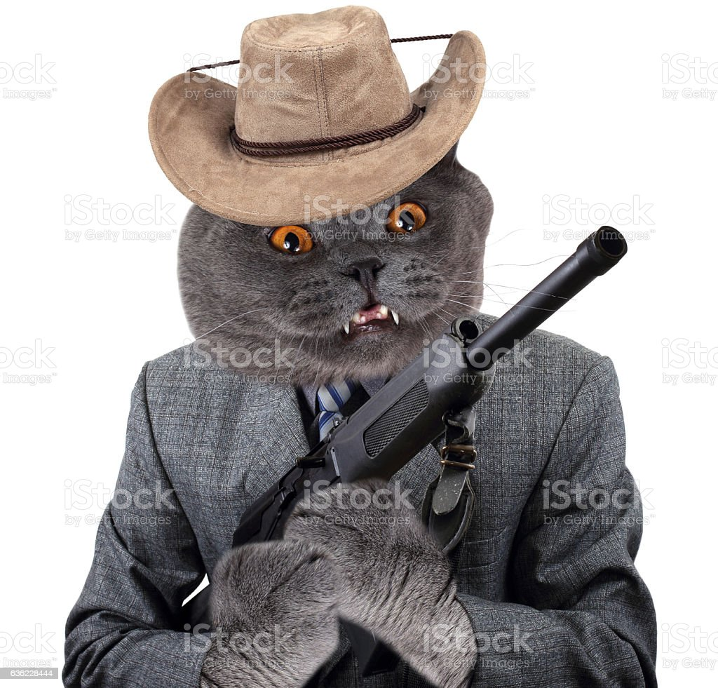 Funny gangster cat with gun stock photo