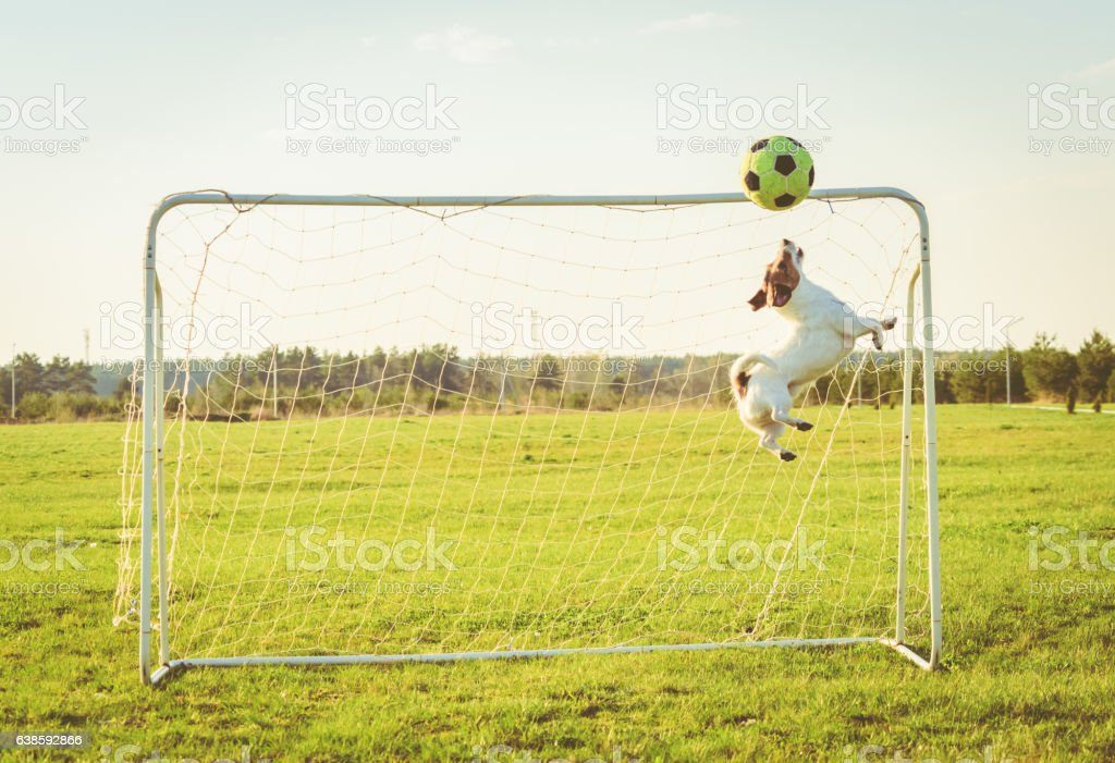 Funny goalkeeper jumping and catching football (soccer) ball stock photo