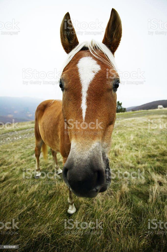 Funny horse head portrait stock photo