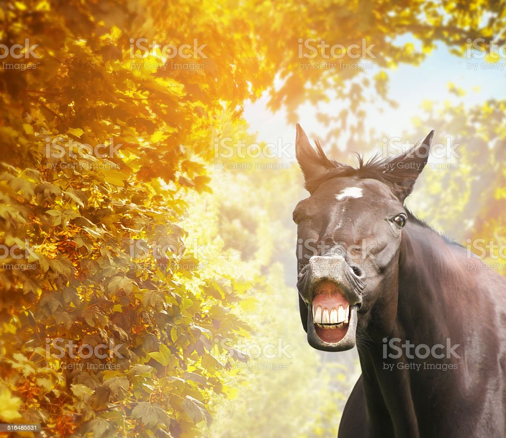 Funny horse over autumn foliage in sunshine stock photo