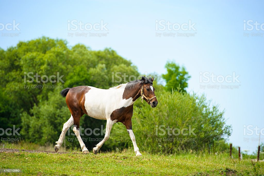 Funny horse stock photo