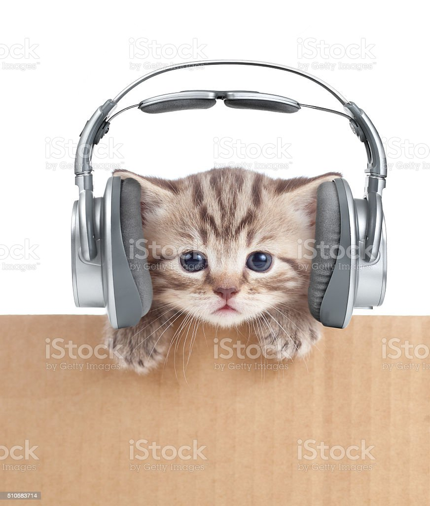 Funny kitten cat in headphones behind cardboard box stock photo