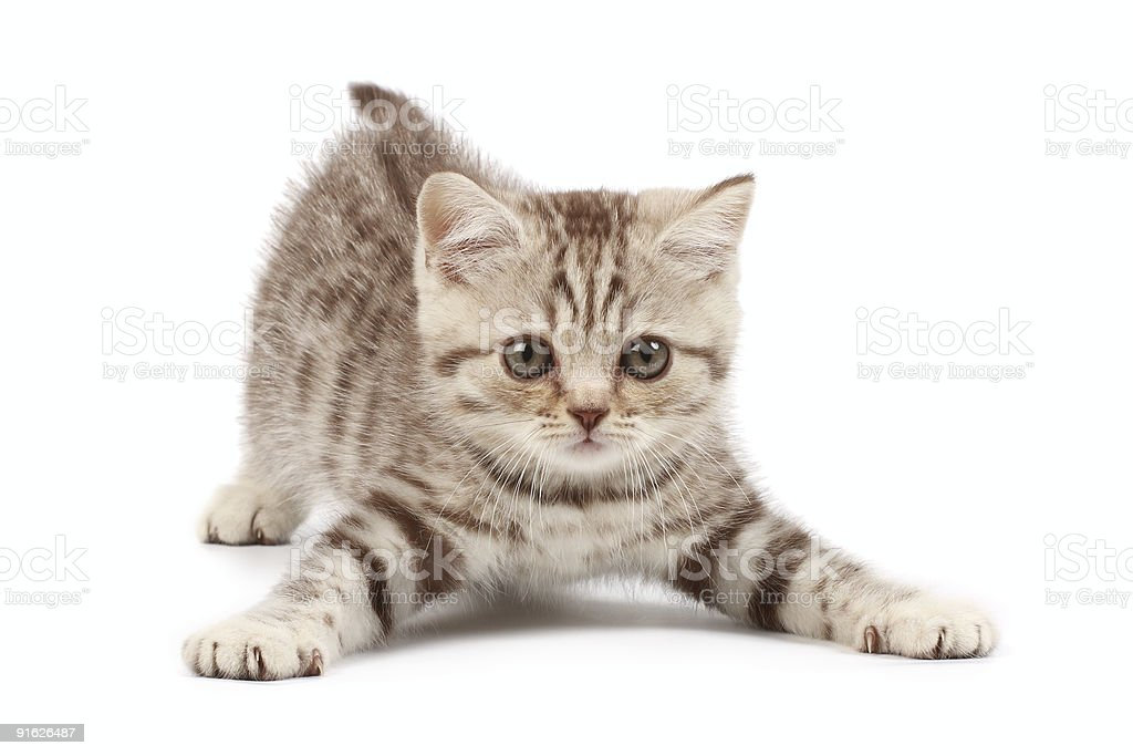 Funny kitten stock photo