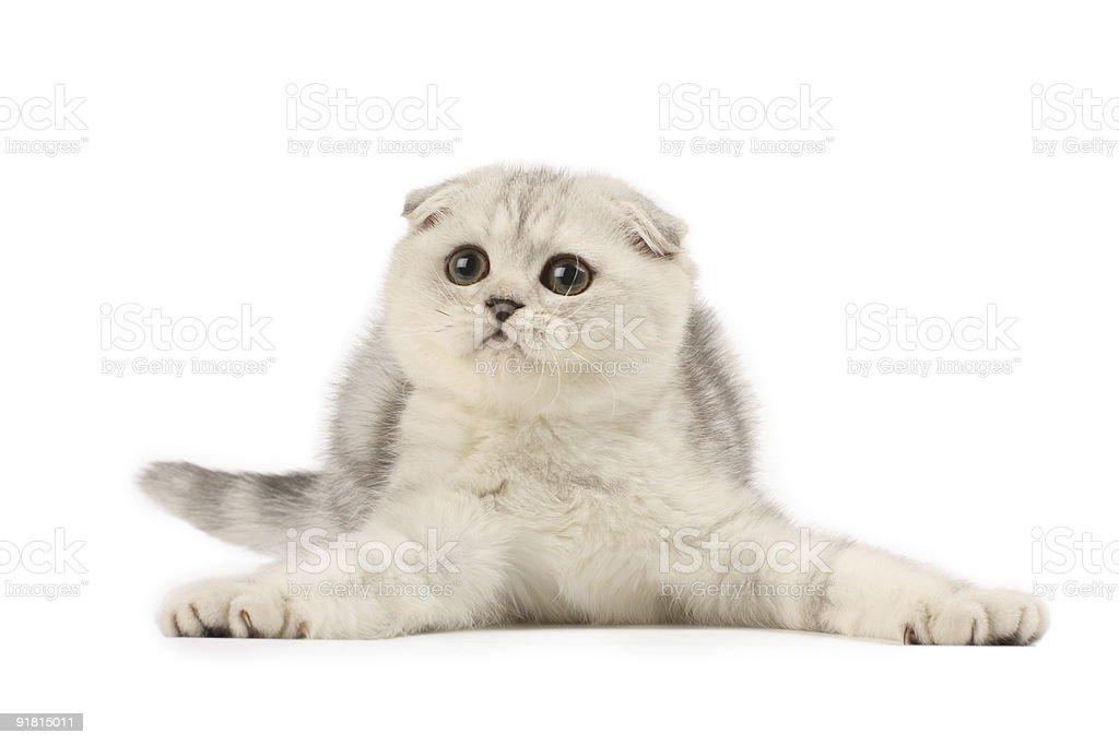 Funny kitten royalty-free stock photo