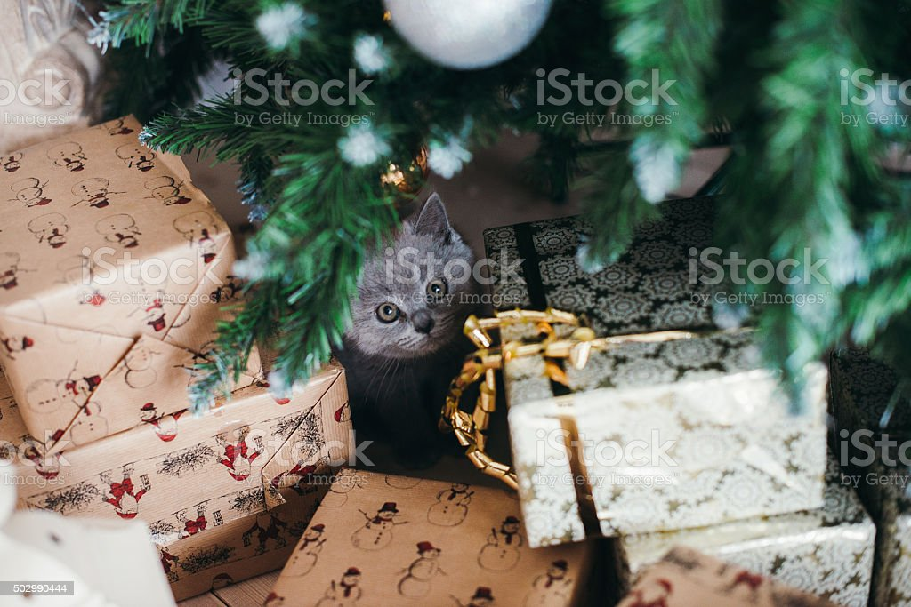 funny little cat and christmas tree stock photo