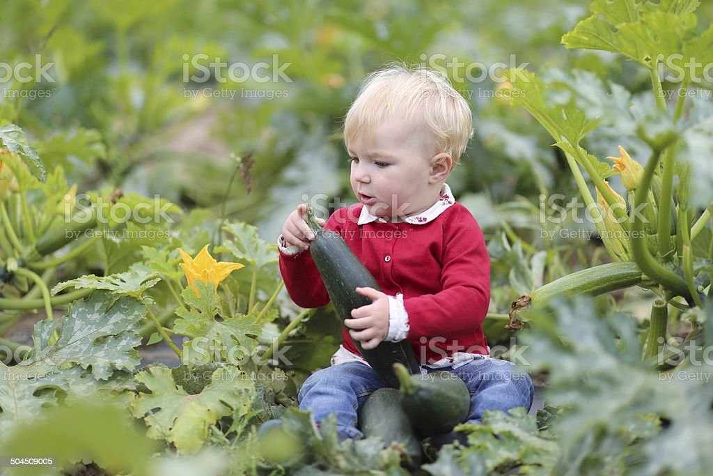 Funny little girl playing in zucchini field stock photo