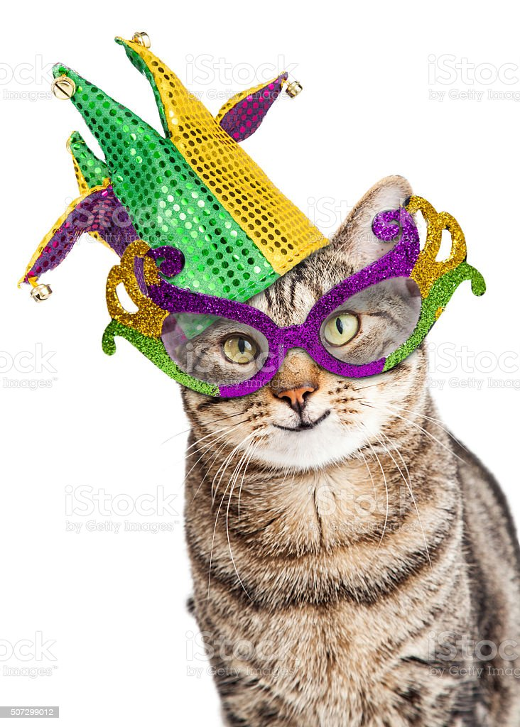 Funny Mardi Gras Cat stock photo