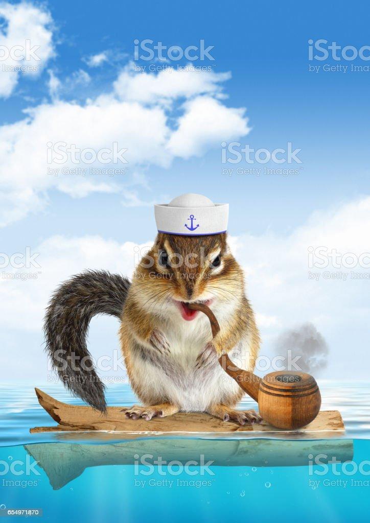 Funny mariner concept, animal chipmunk floating stock photo