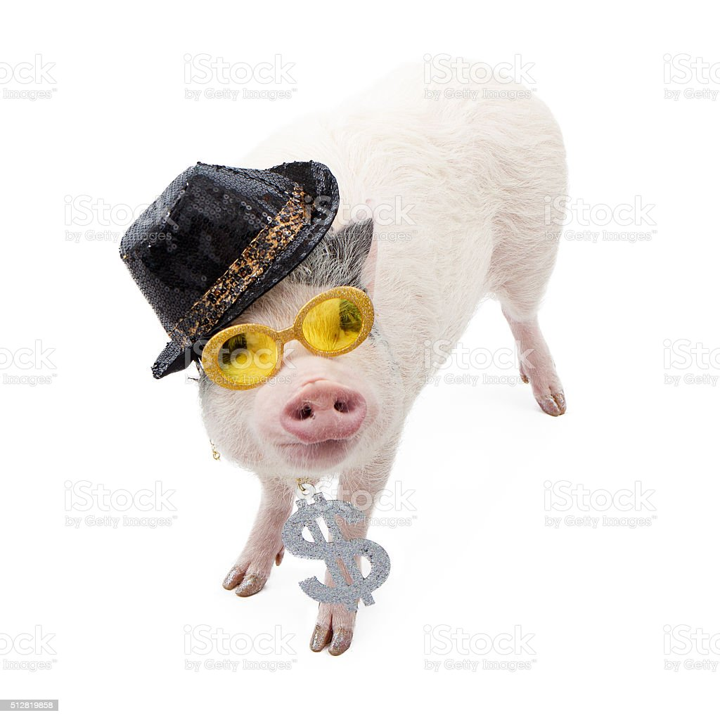 Funny Money Hungry Pig stock photo
