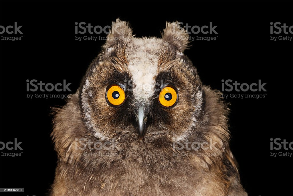 Funny Owl stock photo