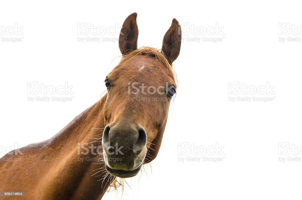 funny portrait of warmblood horse stock photo