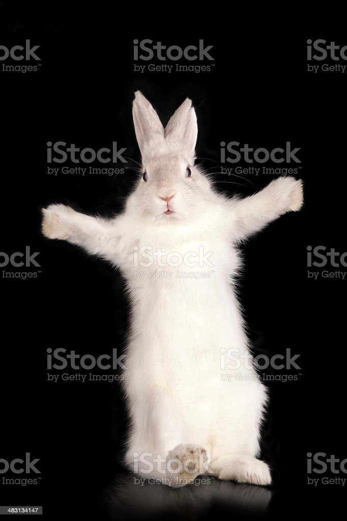 Funny rabbit with open pads stock photo