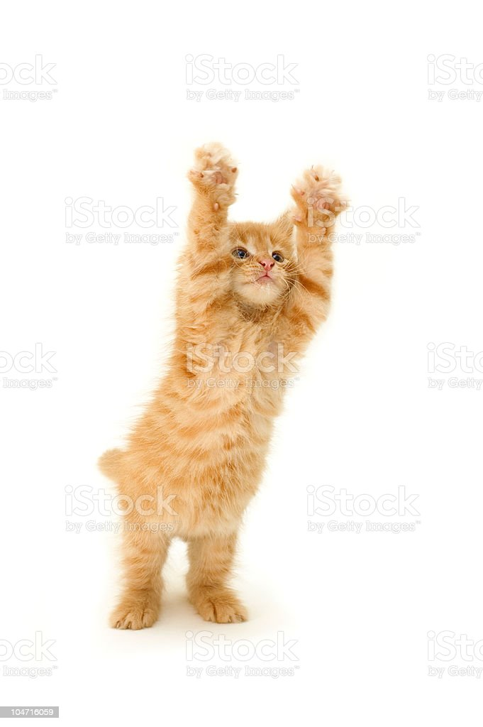 funny red kitten stock photo