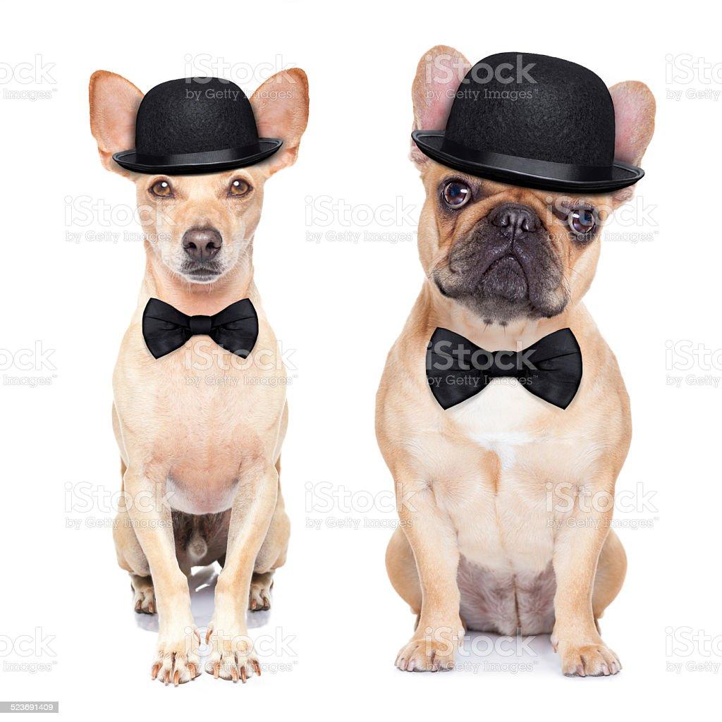 funny retro dog stock photo