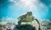 Funny sea turtle