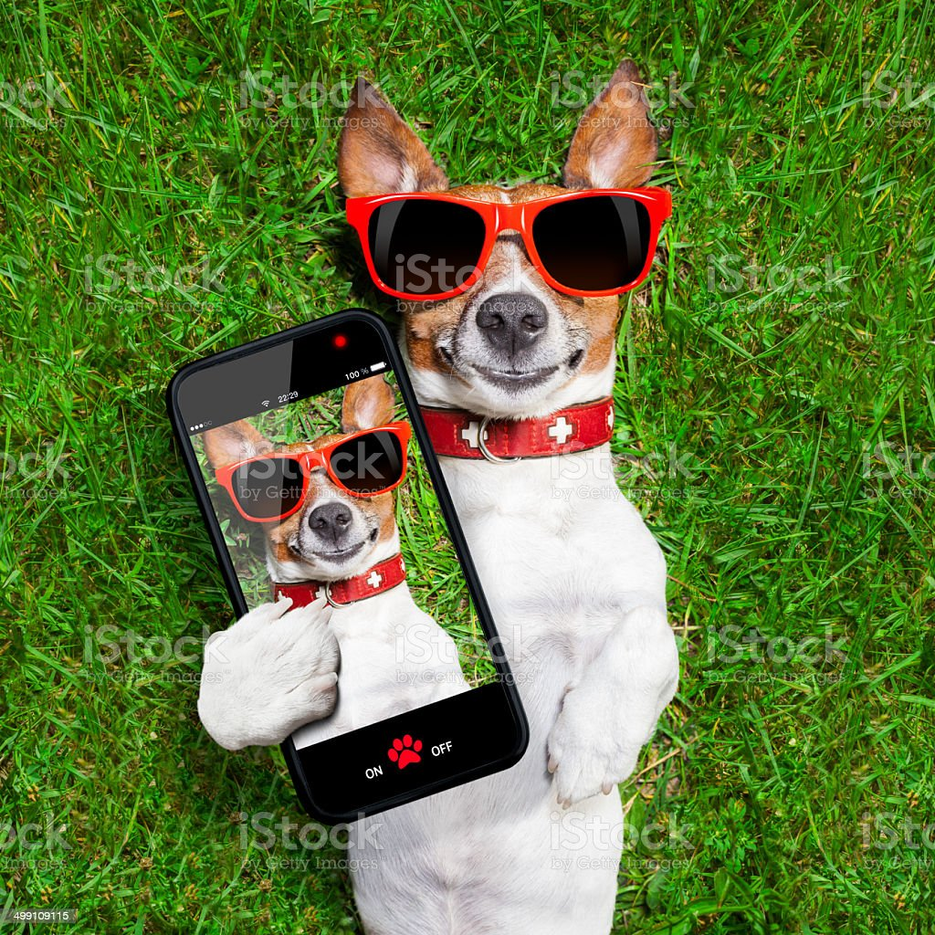 funny selfie dog stock photo