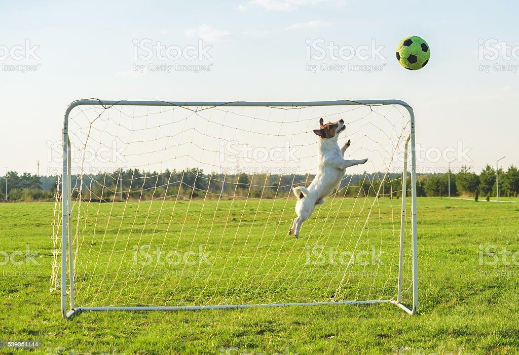 Funny soccer football goalie keeper saving a goal stock photo
