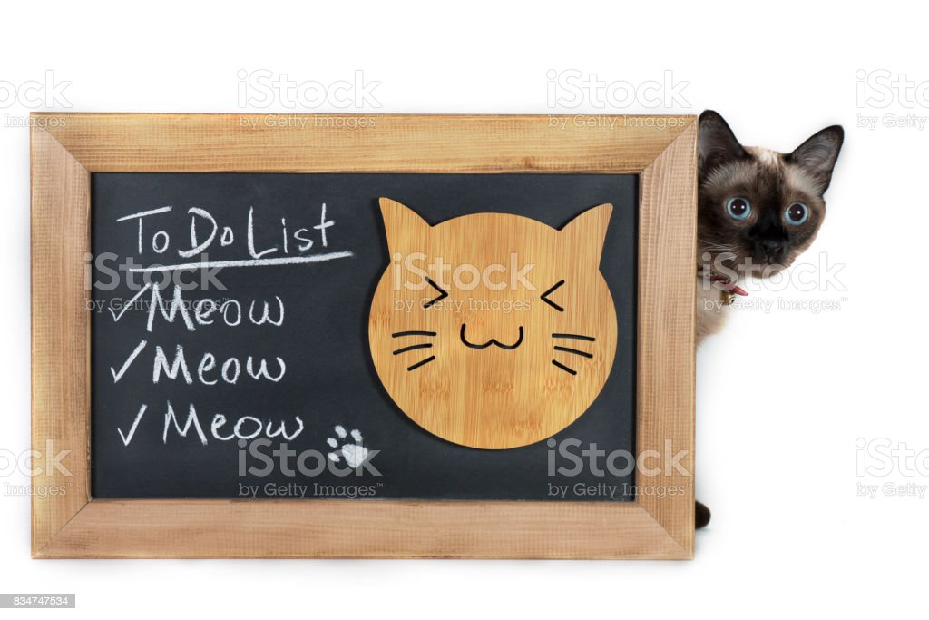 Funny To Do List on Blackboard written with Chalk and A Siamese Cat Looking near of board stock photo