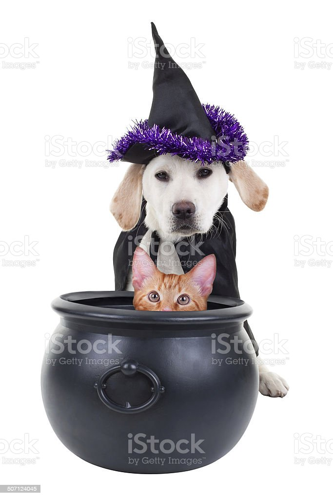 Funny Witch Dog and Cat stock photo