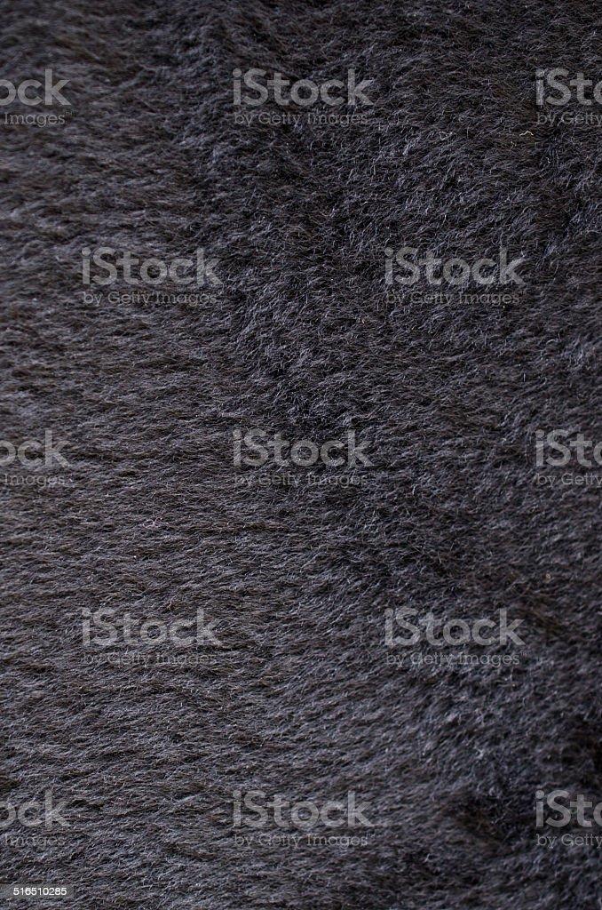 fur animal stock photo