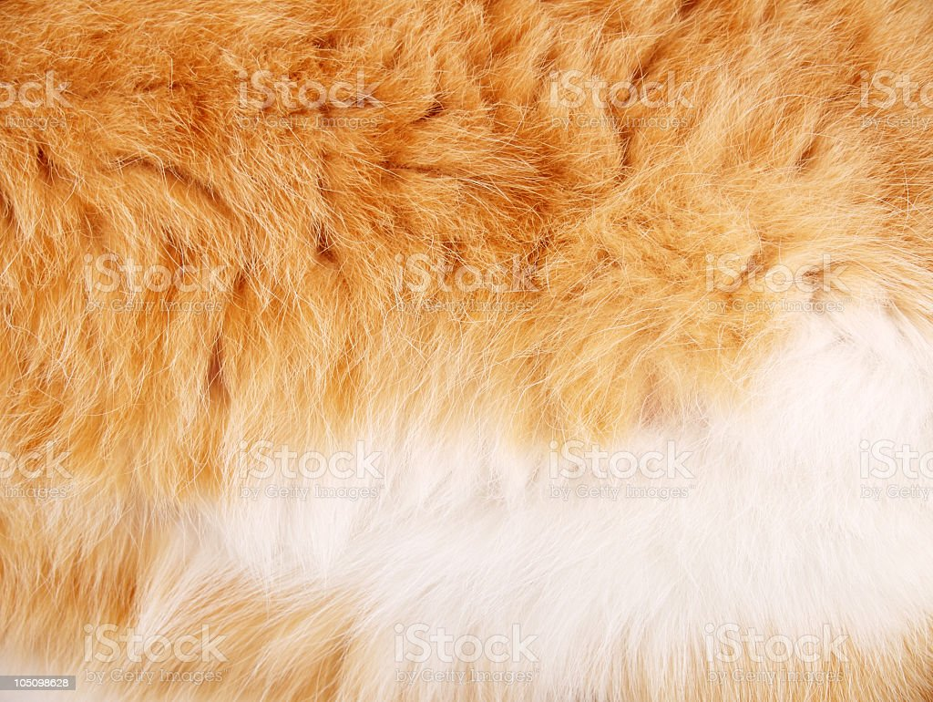 Fur Background royalty-free stock photo
