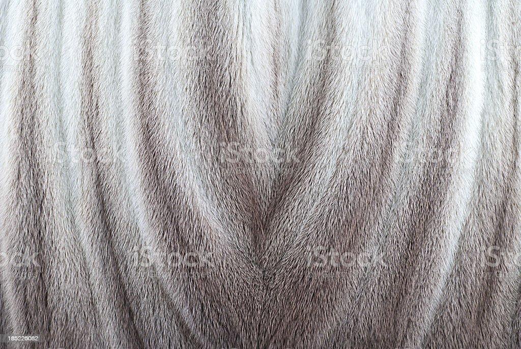 Fur Background stock photo