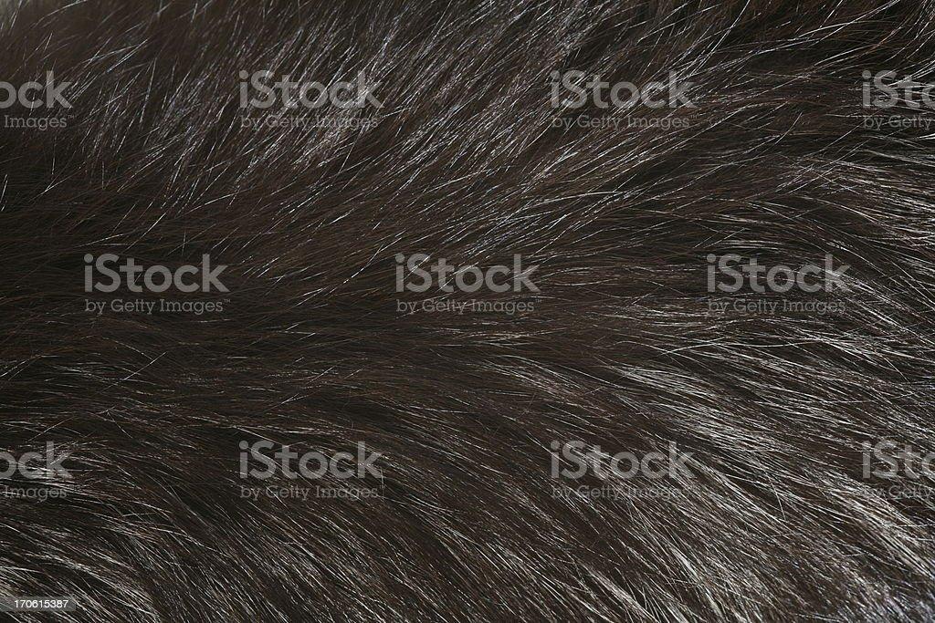 Fur detail stock photo