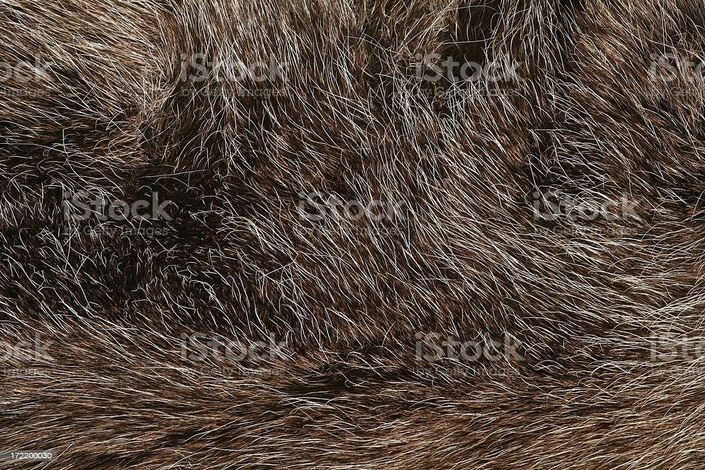 Fur detail royalty-free stock photo