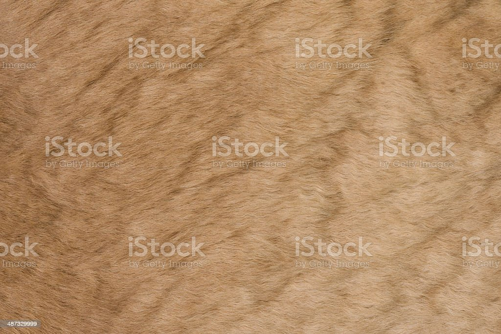 Fur kangaroo royalty-free stock photo