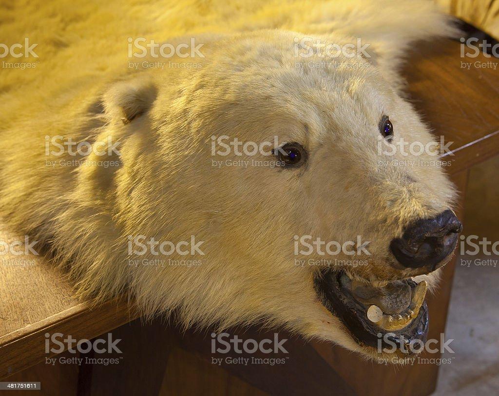 Fur of bear stock photo