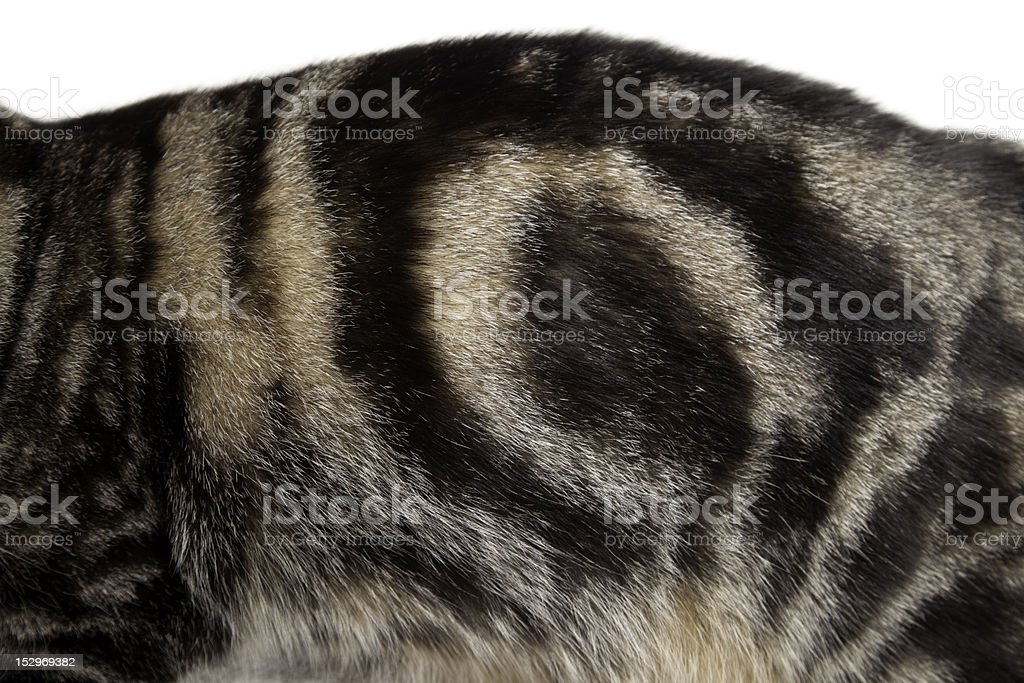 Fur Pattern 2. royalty-free stock photo