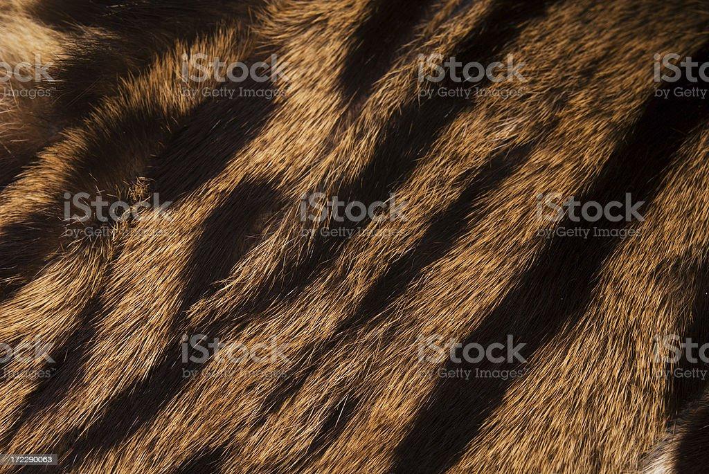 Fur stock photo
