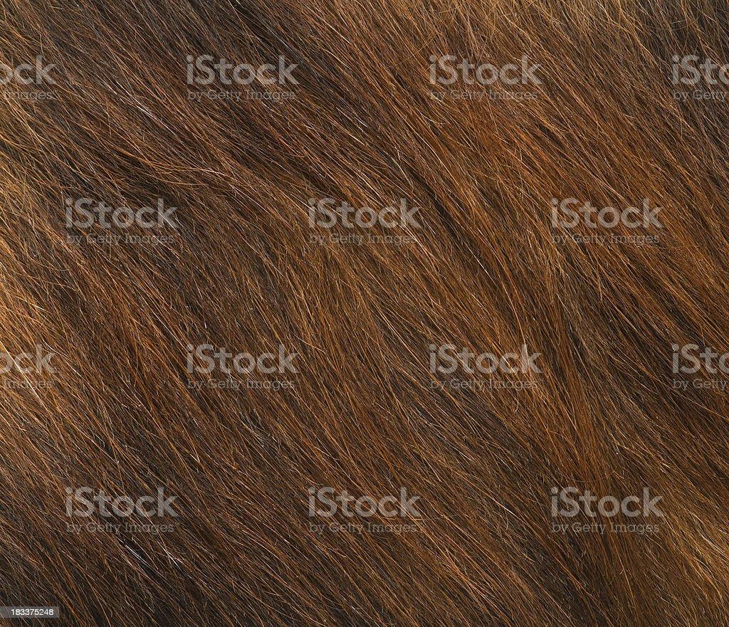 Fur. stock photo