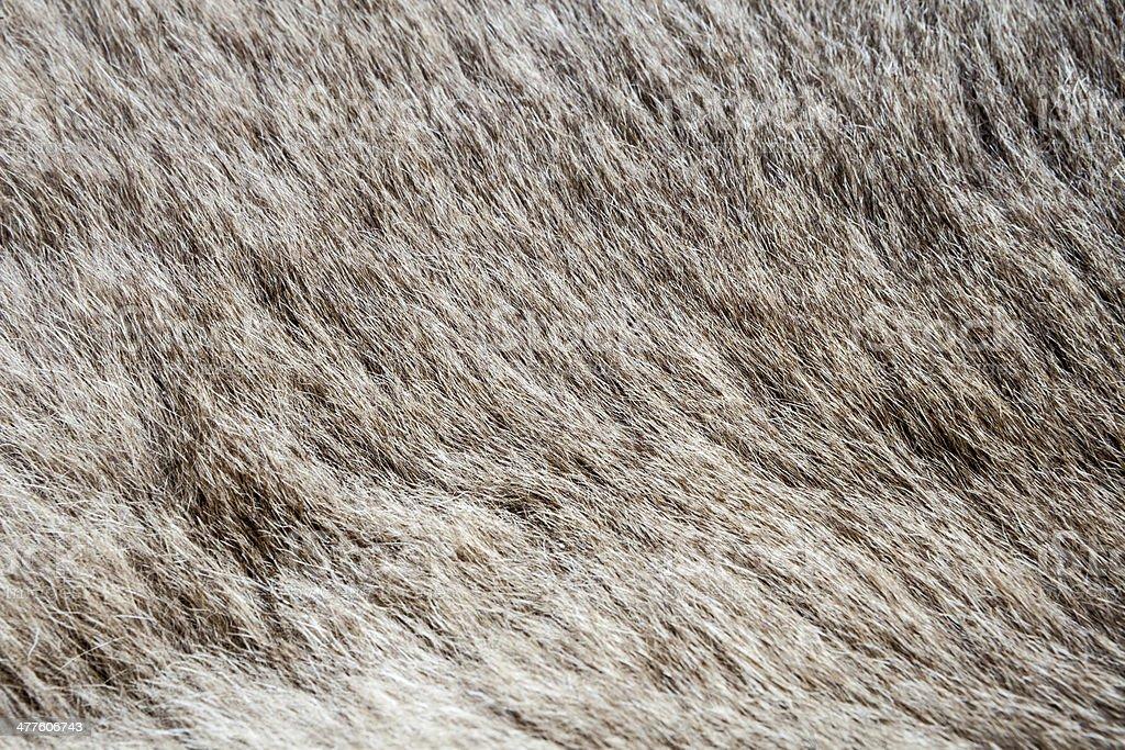 fur royalty-free stock photo
