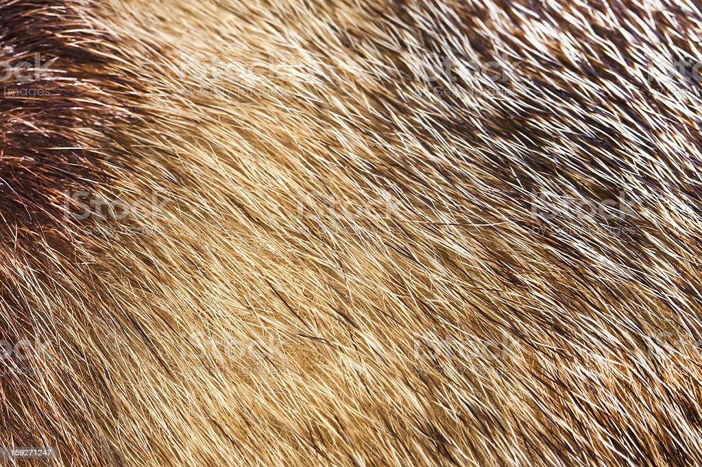 Fur texture backround royalty-free stock photo