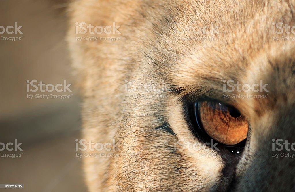 Furious Eyes royalty-free stock photo