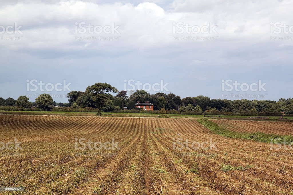 Furrowed Norfolk fields royalty-free stock photo