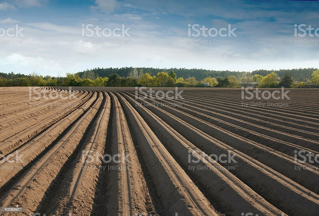 Furrows royalty-free stock photo