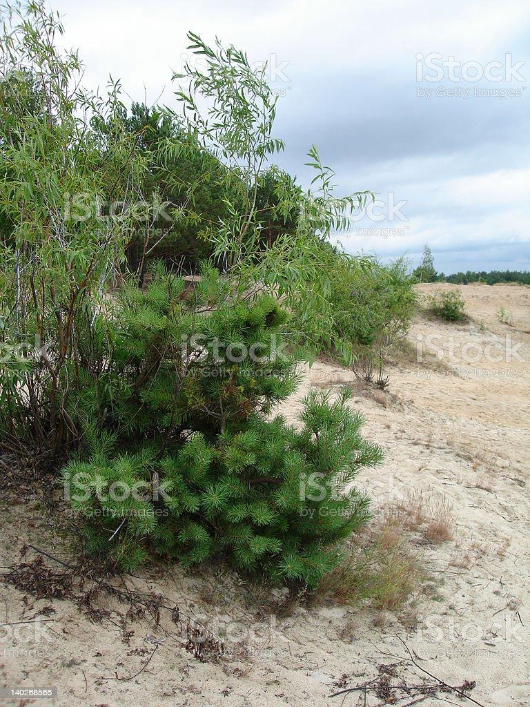 De peles-árvore em uma praia e nuvens no Céu foto de stock royalty-free