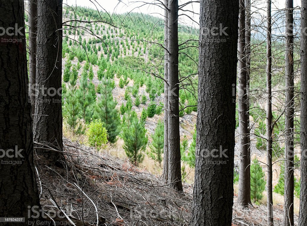 Future Forest Growth royalty-free stock photo