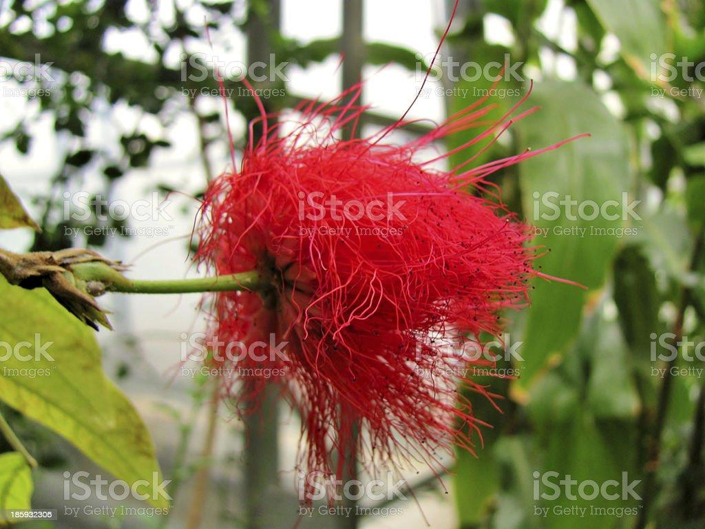 Fuzzy Ball stock photo